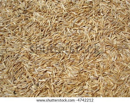 Grass seed background. - stock photo