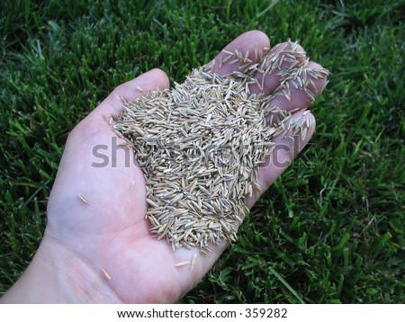 Grass seed in hand - stock photo