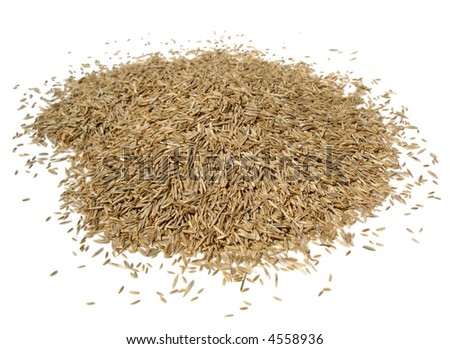 grass seed pile against white - stock photo