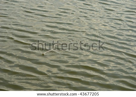Grass snake in water