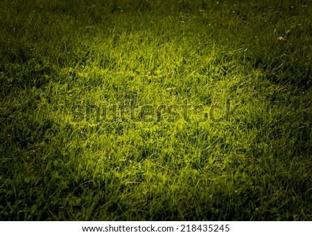 Grass spotlight background texture with green grass in sunlight. - stock photo