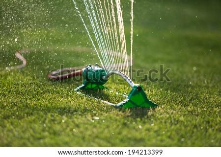Grass sprinkler - stock photo