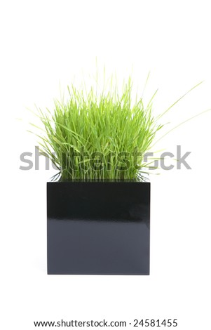Grass sprouts isolated on white in the studio - stock photo