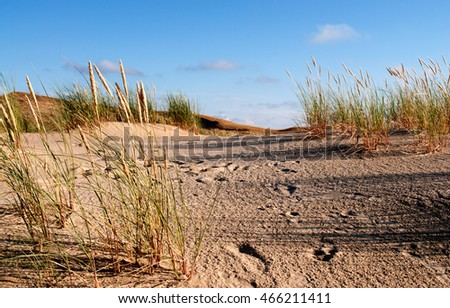 Grass stems on sand dune