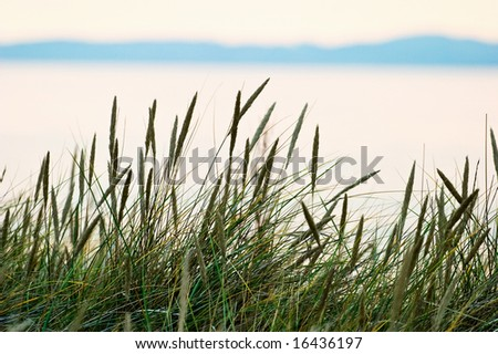 Grass straw on the beach in sunset - stock photo