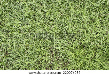 grass texture image for background usage . - stock photo