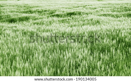 grass texture on sunset - green tones - stock photo