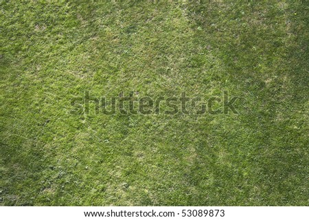 grass top down view