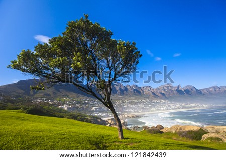 Grass, Tree, and Blue Sky, Camps Bay, South Africa - stock photo