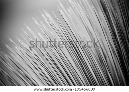 Grass Tree (xanthorrhoea) in sharp detail against a blue sky - stock photo