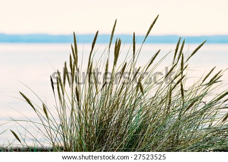 Grass turf on the beach in sunset - stock photo
