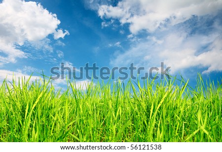Grass under blue sky - stock photo