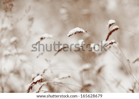 grass under first snow - stock photo