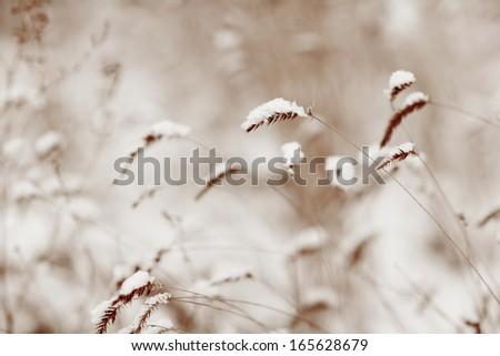 grass under first snow - stock photo