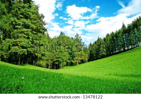 grass valley in forest during summer - stock photo