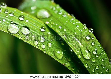 Grass with dew - stock photo