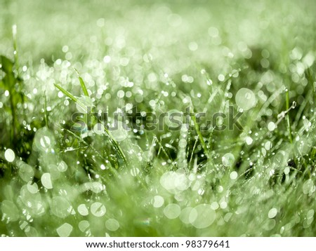 Grass with dew drops background.