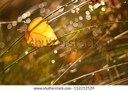 grass with dew drops with the autumn leaf - stock photo
