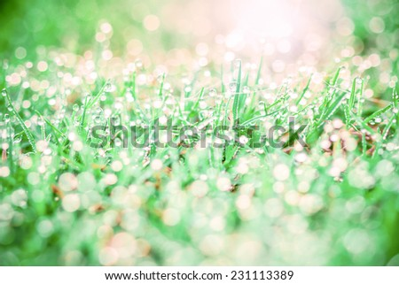 grass with droplets and beauty sweet bokeh background