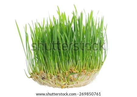 grass with roots on white background - stock photo