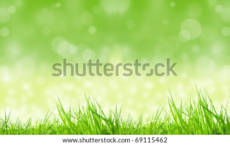 Grass with shiny blur background - stock photo