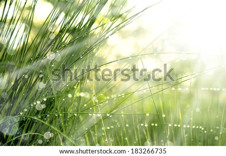 grass with water drops and sunshine, spring background - stock photo