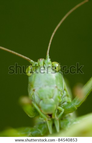 Grasshopper detail - stock photo