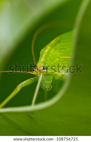 Grasshopper in the  green leaves. - stock photo