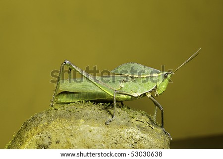 grasshopper insect of tropical forest orange yellow background with gradient and copy space