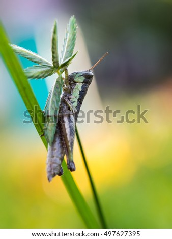 Grasshopper on The Unwanted Flora