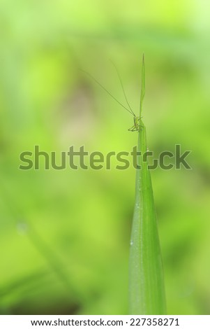 Grasshopper perching on green leaf with clear background