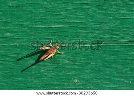 Grasshopper sitting on green wooden board - stock photo