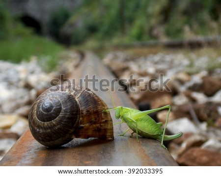 grasshopper, snail and stripes
