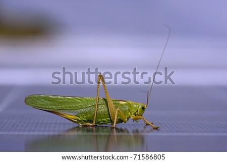 grasshopper to photovoltaic panel - stock photo