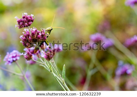 Grasshoppers, which will eat almost any type of vegetation, are one of the most difficult garden pest to control because of their mobility. - stock photo