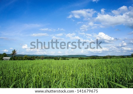 grassland and blue sky backgrounds.Thailand - stock photo