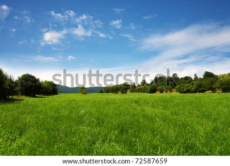 Grassland,nature background - stock photo