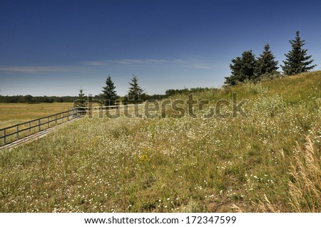 Grassland of the prairie park - stock photo