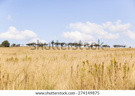 Grassland Trees Wilderness Grassland trees wilderness wildlife landscape - stock photo