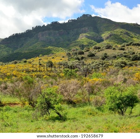 Grassland with trees and bushes in full spring, Gran canaria, Canary islands  - stock photo