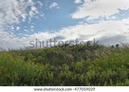 Grassy beach sand dune on a sunny afternoon with light clouds