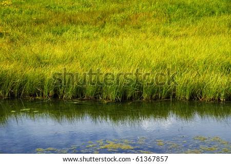 Grassy freshwater marsh at Schwabacher Landing, Grand Teton National Park - stock photo