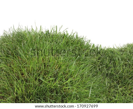 Grassy Hill Isolated on White Background - stock photo