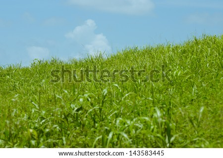 Grassy hill with blue sky