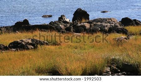 Grassy Marsh - stock photo