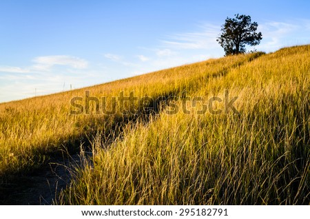 Grassy Meadow at Theodore Roosevelt Wilderness - stock photo