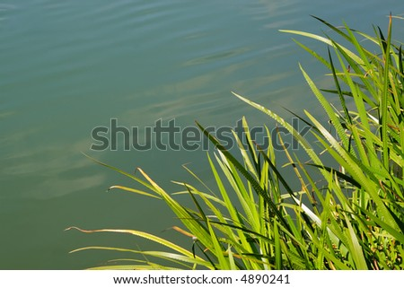 Grassy reeds forming a natural frame on a background of water - stock photo