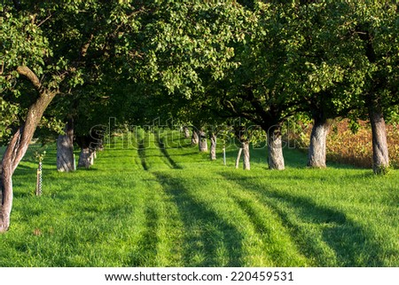 Grassy Road through a Sunlit Alley - stock photo