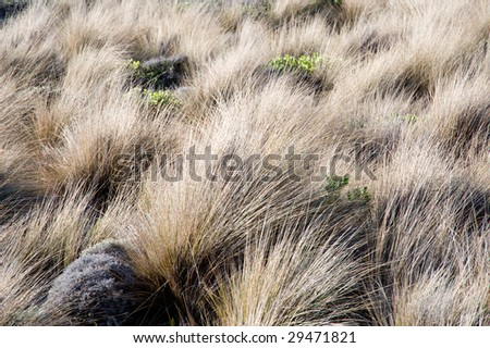 Grassy Textures - stock photo
