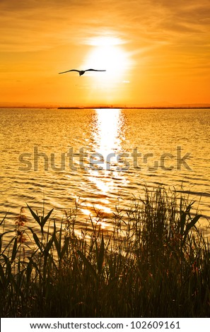 grating the sun - stock photo
